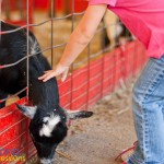 She's doing it!  She's petting him.